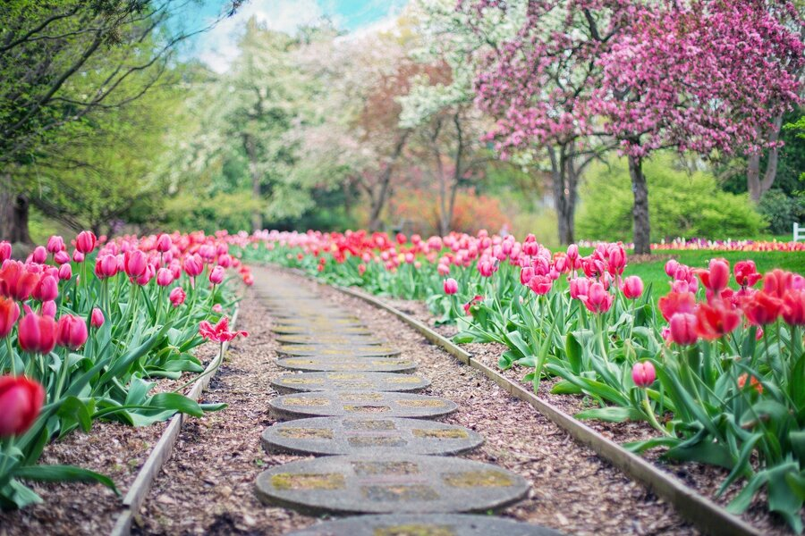 jardin arboré et fleuri